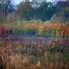 Cameron Prairie NWR, Louisiana 113014 132