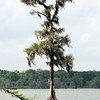 Lake Martin, Breaux Bridge, Louisiana 03262018 086