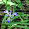 Acadiana Park Nature Trails, Lafayette, Louisiana 04242018 006