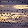 Cameron Prairie NWR, Louisiana 121114 023