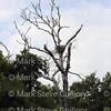 Hawk's Nest, St Mary Parish, Louisiana 04212018 001