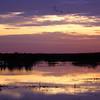 Cameron Prairie NWR, Louisiana 121114 060