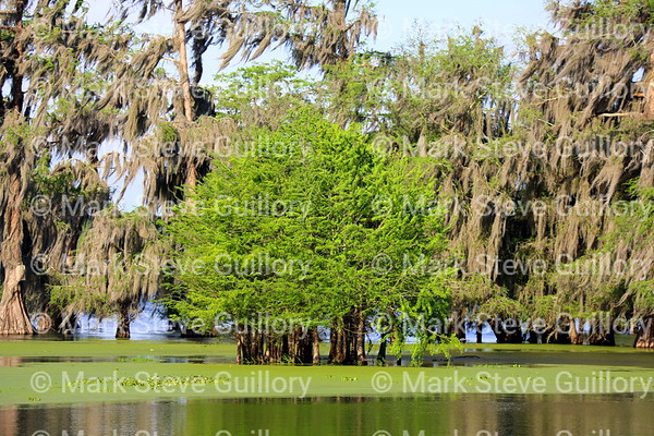 Lake Martin, Breaux Bridge, Louisiana 04042018 014