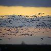 Cameron Prairie NWR, Louisiana 113014 020