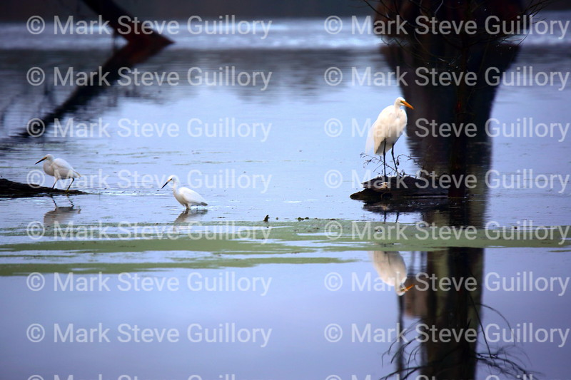 Lake Martin, Breaux Bridge, Louisiana 01082018 127