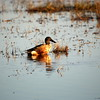 Cameron Prairie NWR, Louisiana 113014 166