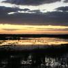 Cameron Prairie NWR, Louisiana 113014 004