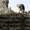Hawk's Nest, St Mary Parish, Louisiana 04212018 020