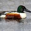 Pintail Wildlife Drive, Cameron Prairie NWR, Louisiana 02052018 152