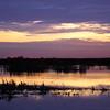 Cameron Prairie NWR, Louisiana 121114 048