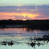 Cameron Prairie NWR, Louisiana 113014 059