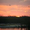 Cameron Prairie NWR, Louisiana 113014 052