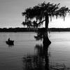 Lake Martin, Breaux Bridge, Louisiana 03302018 023 bw