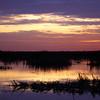 Cameron Prairie NWR, Louisiana 121114 067