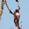 Hawk's Nest, St Mary Parish, Louisiana 05032018 126