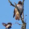 Hawk's Nest, St Mary Parish, Louisiana 05032018 154