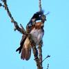 Hawk's Nest, St Mary Parish, Louisiana 05032018 022