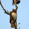 Hawk's Nest, St Mary Parish, Louisiana 05032018 049