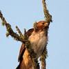 Hawk's Nest, St Mary Parish, Louisiana 05032018 023