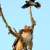 Hawk's Nest, St Mary Parish, Louisiana 05032018 024