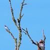Hawk's Nest, St Mary Parish, Louisiana 05032018 143