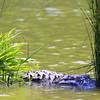 RIPs Rookery, Jefferson Island, New Iberia, Louisiana 05012018 022