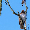 Hawk's Nest, St Mary Parish, Louisiana 05032018 149