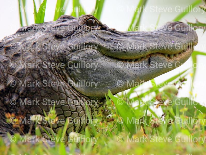 RIPs Rookery, Jefferson Island, New Iberia, Louisiana 05032018 009