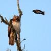 Hawk's Nest, St Mary Parish, Louisiana 05032018 041
