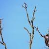 Hawk's Nest, St Mary Parish, Louisiana 05032018 144