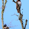 Hawk's Nest, St Mary Parish, Louisiana 05032018 128