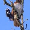 Hawk's Nest, St Mary Parish, Louisiana 05032018 150