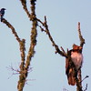 Hawk's Nest, St Mary Parish, Louisiana 05032018 044