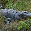 Anahuac National Wildlife Preserve, Texas