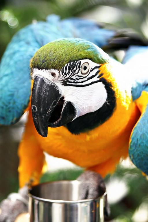 Parrot: Close-up
