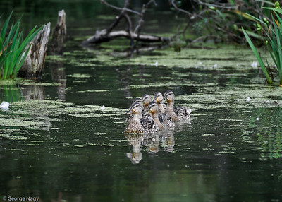 Synchronized swimming