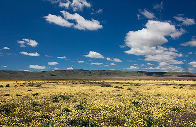 Carrizo Plain California