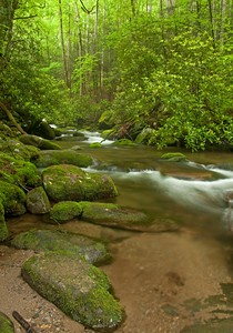 Stream In Tennessee Roaring Forks