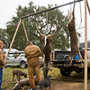 Dressing the deer