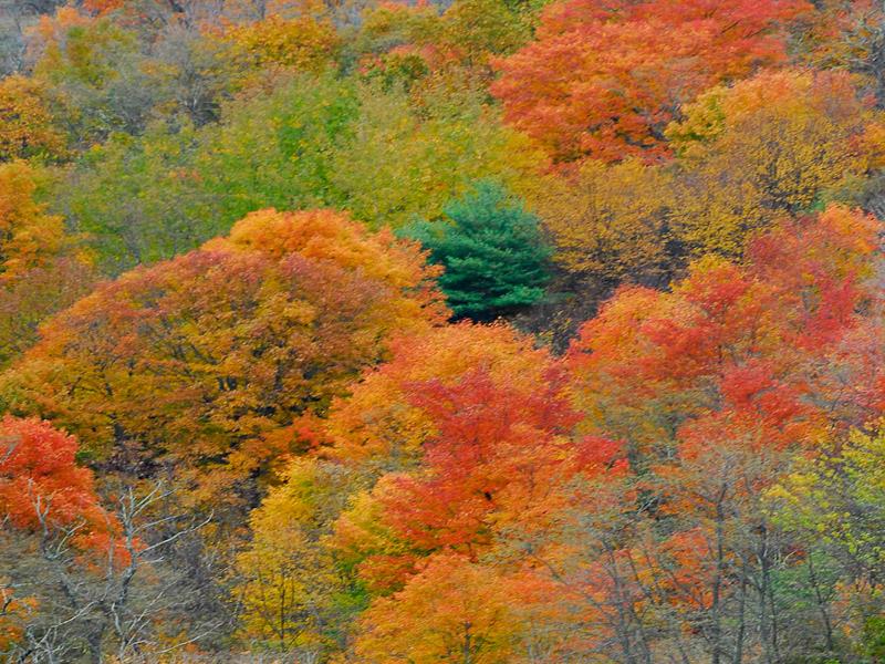 West Virginia Fall