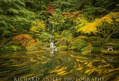 Golden Swirls-Japanese Gardens