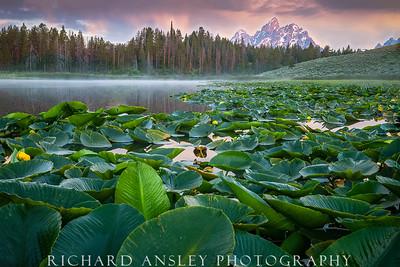 Teton Lilly Pond-Teton NP, Wyoming
