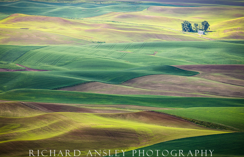 Distant Silos-Palouse, Washington