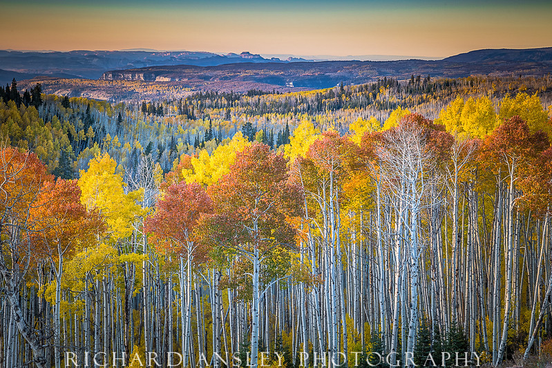 Flaming Aspens-Cedar Canyon, Utah