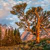 Old Man of the Tetons-Wyoming