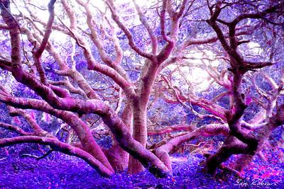 87 3758 s Violet