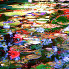 Abstract Water Lilies #5