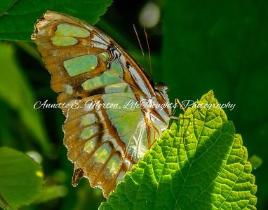 """""""Butterfly World"""" Coconut Creek FL"""