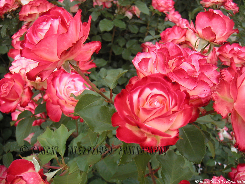 Love Bloom