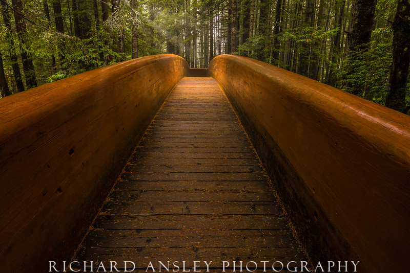 Forest Bridge-Pacific Northwest